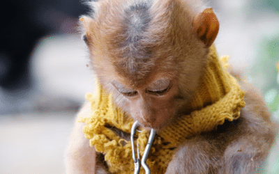 Animal Abuse on Social Media Must End
